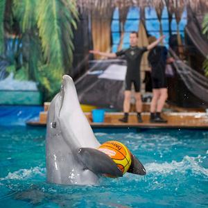 Дельфинарии, океанариумы Зольного