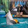 Дельфинарии, океанариумы в Зольном