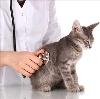 Ветеринарные клиники в Зольном